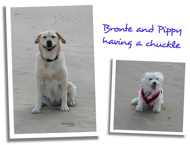Bronte and Pippy